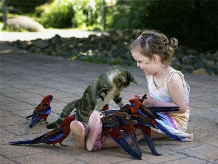 девочка,кошка,голуби (700x525, 103Kb)