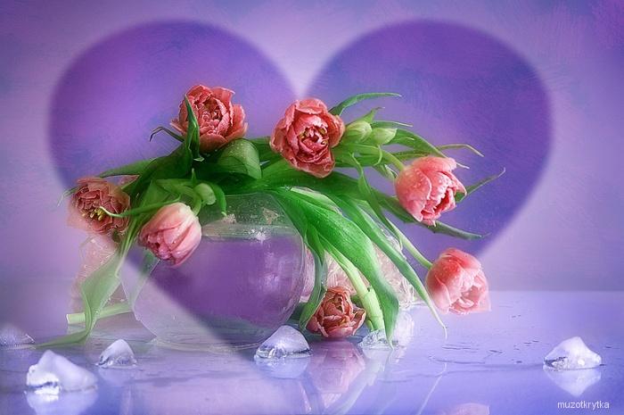 тюльпаны (700x465, 119Kb)