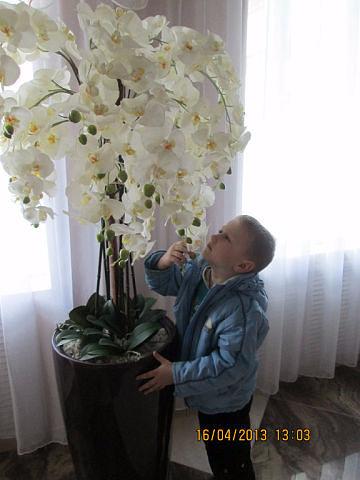 орхидея гигант (360x480, 118Kb)