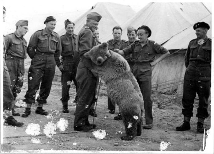 Каких животных используют на войне
