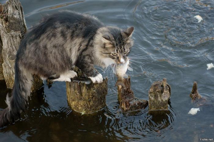 ловить котят на удочку