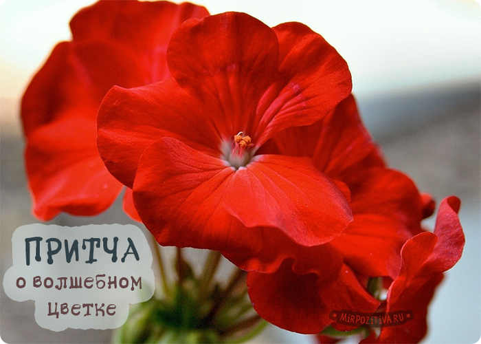 волш.цветок_притча (700x500, 176Kb)