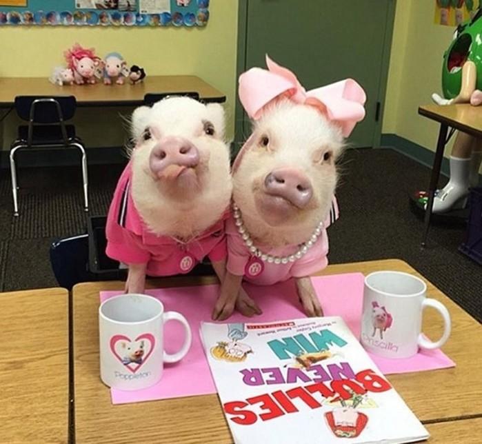 Котенок в костюме свиньи. И наоборот