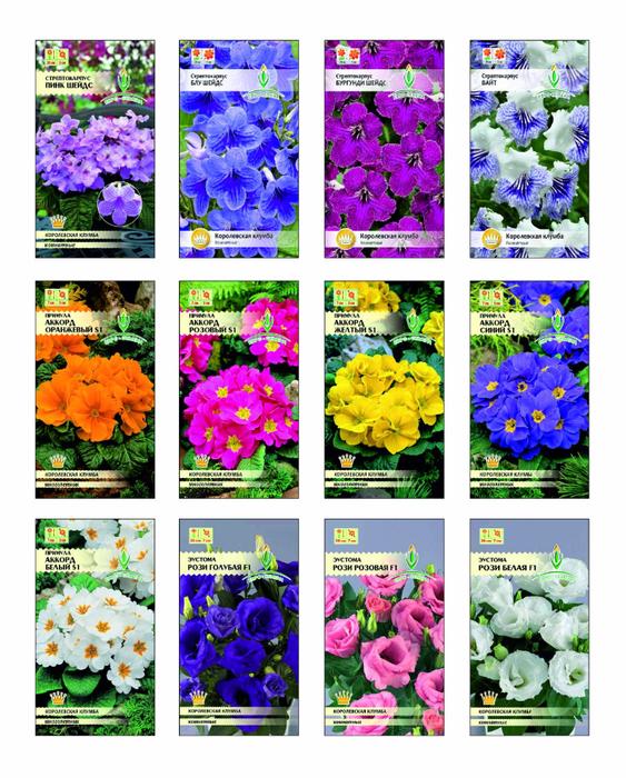 Какие цветы сажать в августе семенами 136