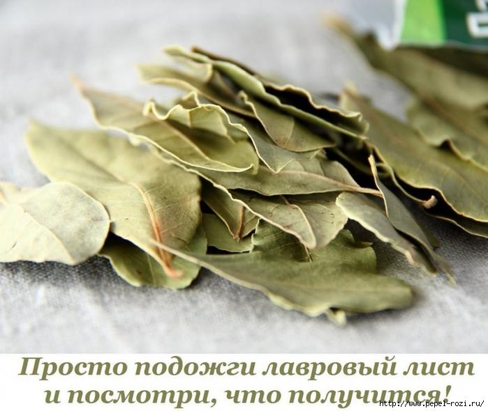 4403711_132785277_5365358_Prosto_podojgi_lavrovii_list_i_posmotri_chto_polychitsya (699x590, 255Kb)