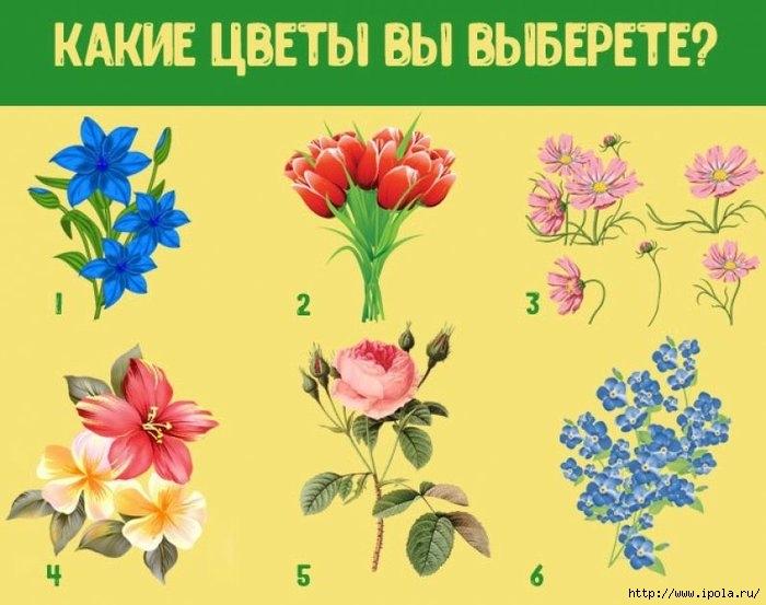 "alt=""Какие цветы Вы выберете?""/2835299_Kakie_tsvetyi_Vyi_vyiberete_796x629 (700x553, 162Kb)"