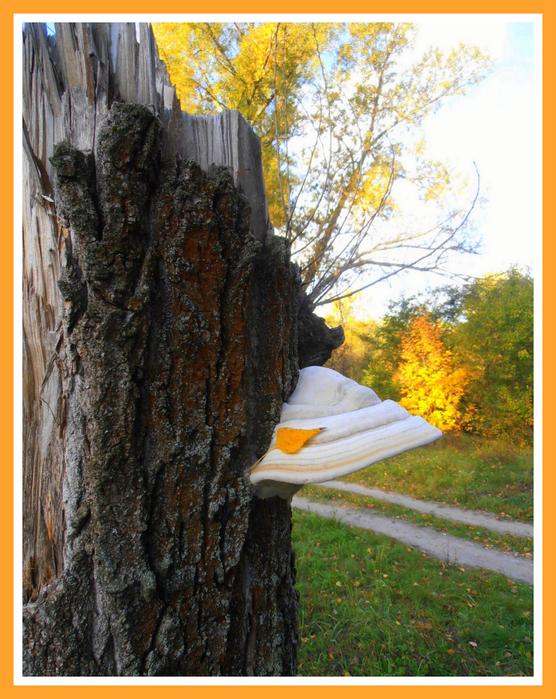 1-28 сентября 2012 пейзажи 010 (556x700, 530Kb)