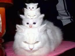 Смешные кошки2 (259x194, 31Kb)