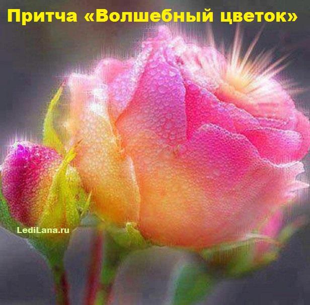 3925311_volshebnii_cvetok (616x606, 102Kb)