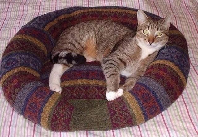 Кроватка для кошки из старого свитера1 (640x445, 287Kb)