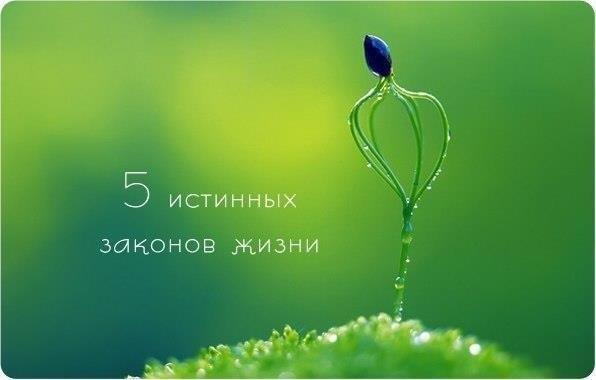 3788799_5_istinnih_zakonov_jizni (596x380, 22Kb)