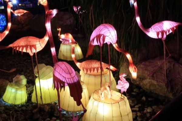 Светящийся-сад-в-Дубаи-Dubai-Garden-Glow-12 (600x400, 241Kb)