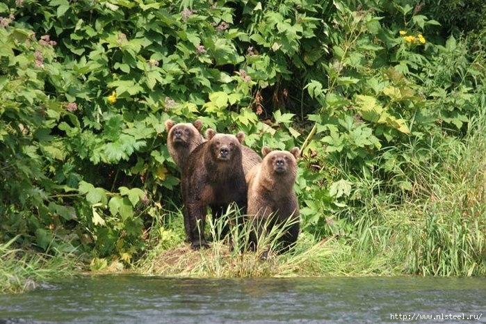 медведи фото/3925073_2DUVgQJwXN4 (700x466, 294Kb)