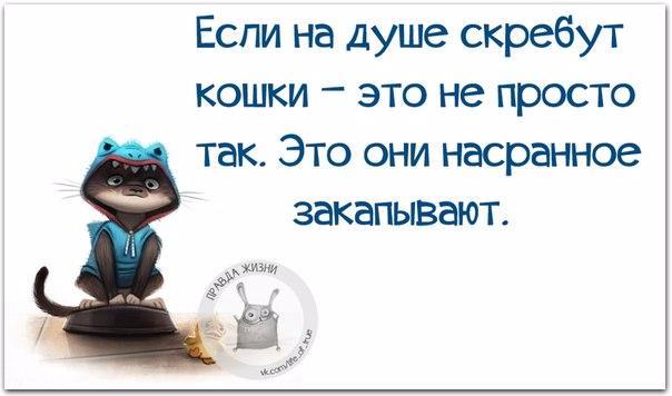 1456252557_frazki-5 (604x356, 137Kb)