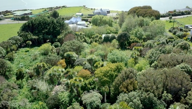 New-Zealand-food-forest.png.662x0_q70_crop-scale (662x378, 482Kb)