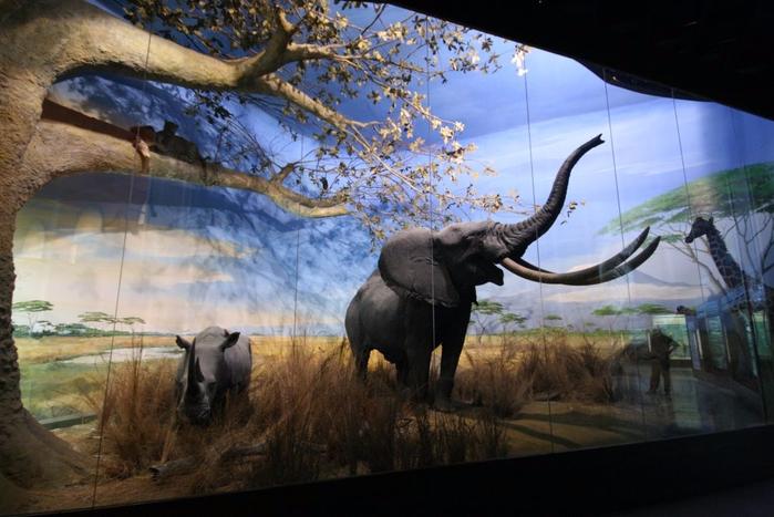 музей естествознания в милане 1 (700x467, 346Kb)