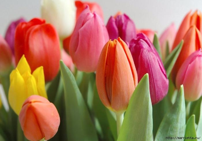 Цветы для вас (18) (700x489, 213Kb)