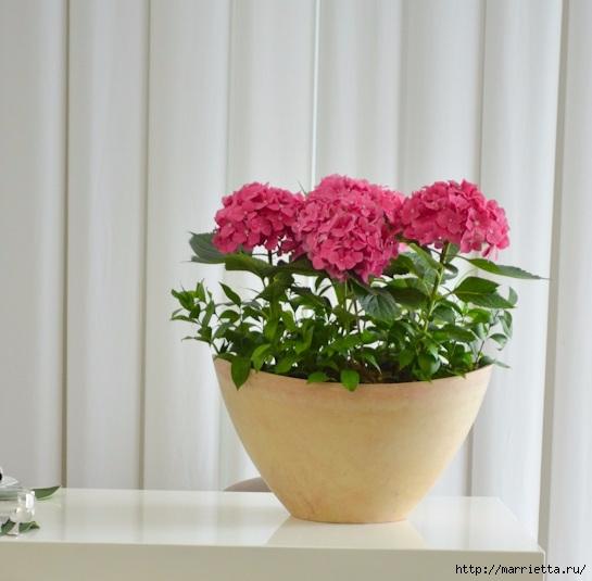 Цветы для вас (22) (545x535, 142Kb)