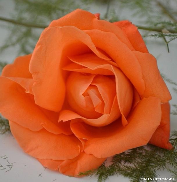 Цветы для вас (42) (609x625, 186Kb)