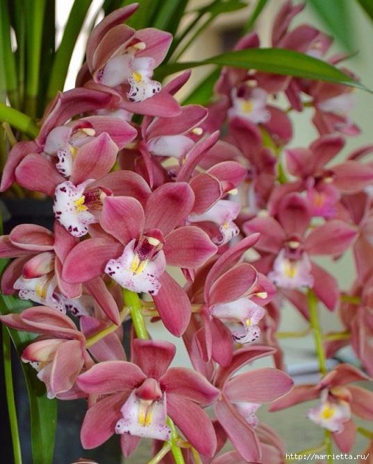 Цветы для вас (70) (537x669, 240Kb)