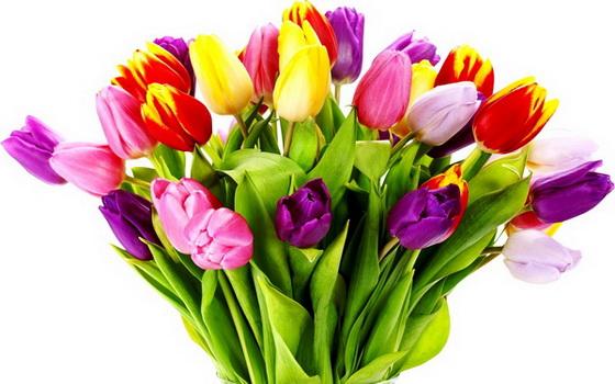 цветы (560x350, 79Kb)