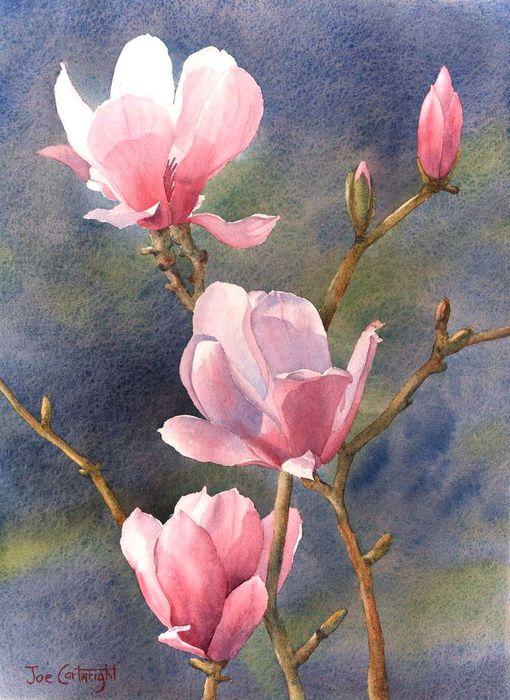 Magnolias-2-D5 (510x700, 82Kb)