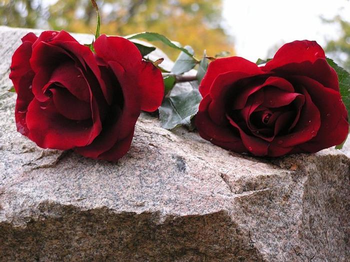 2 розы (700x525, 127Kb)