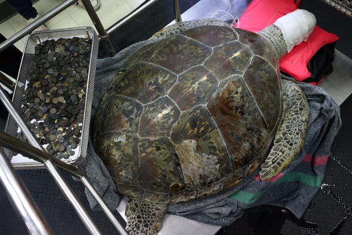 черепаха банк 1 (700x468, 454Kb)