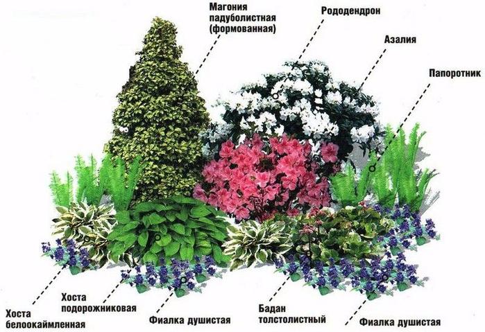 Тенелюбивые цветы для сада многолетние