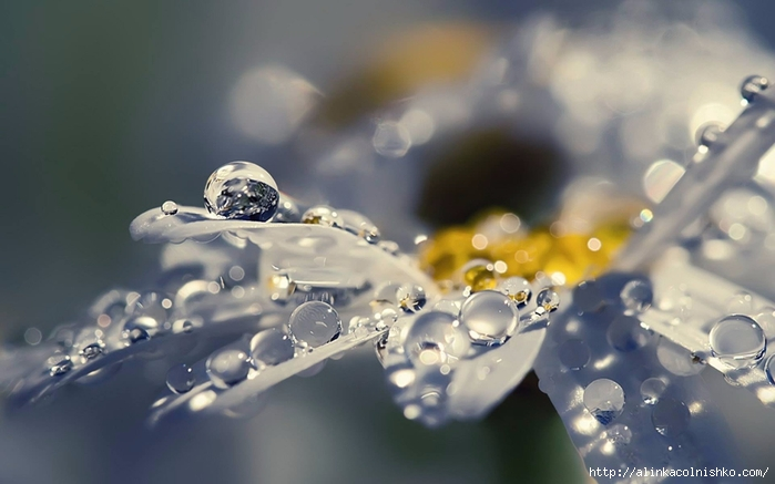 Water-Drops-Photography-15 (700x437, 174Kb)