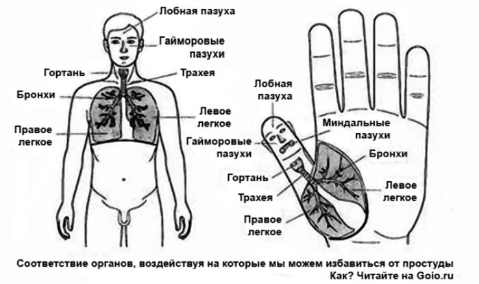 """alt=""""Лечение простуды методами Су Джок терапии """"/2835299_ (700x414, 125Kb)"""