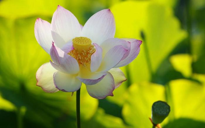 цветок 8 (700x437, 251Kb)