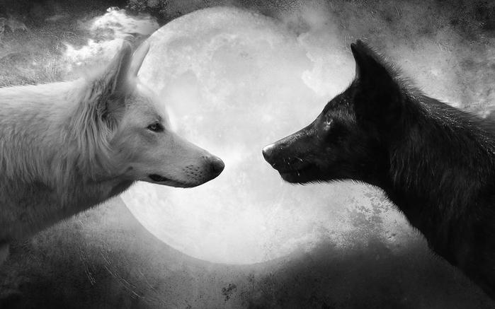 два волка (700x437, 175Kb)