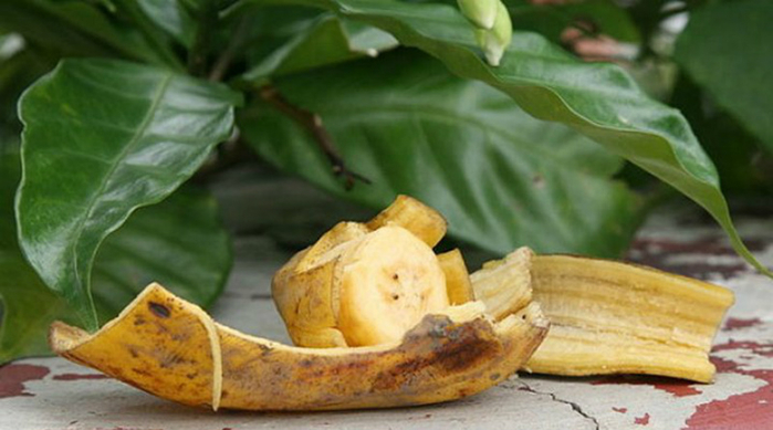 bananas (700x389, 253Kb)