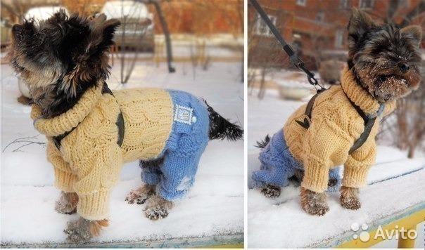 Вяжем комбинезон собачкам