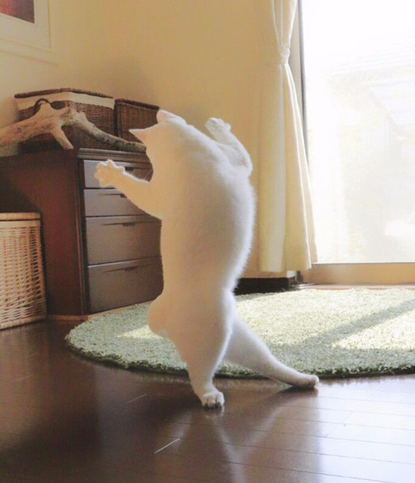 прикольные фото кошек 3 (601x700, 369Kb)