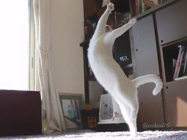 прикольные фото кошек 5 (605x454, 217Kb)