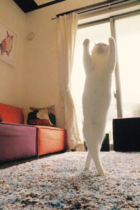 прикольные фото кошек 8 (465x700, 366Kb)