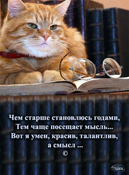 очки кот (425x575, 205Kb)