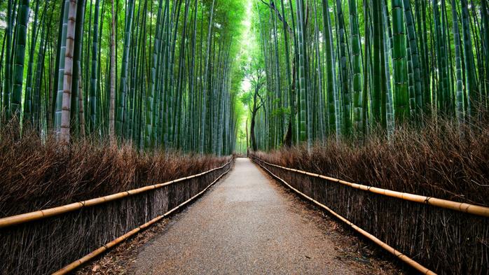 бамбуковый лес в киото 9 (700x393, 471Kb)