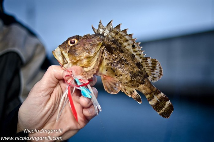 Какие существа в Черном море опасны для человека