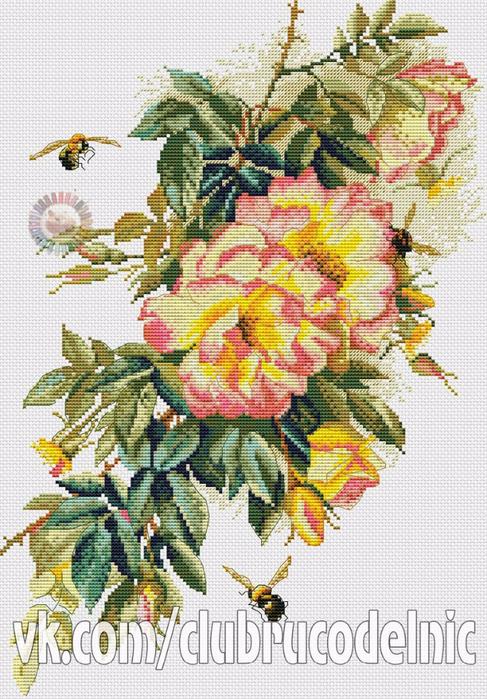 вышивка Цвет шиповника (487x700, 490Kb)