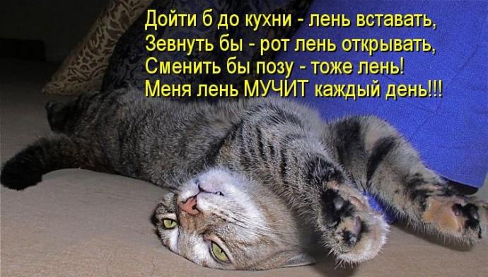 5420033_86d5adb764c28e2fb8c26108e5776039_RSZ_690 (690x392, 188Kb)
