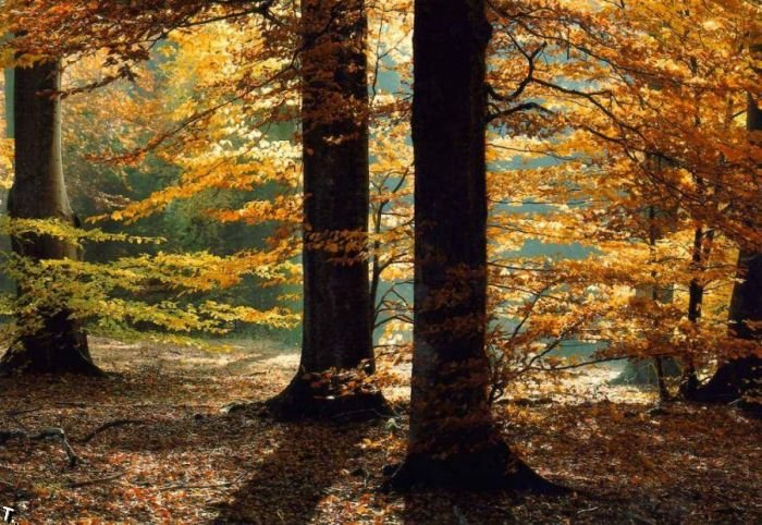 5672049_beautiful_forests_12 (700x482, 111Kb)