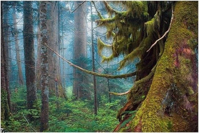 5672049_beautiful_forests_14 (700x469, 111Kb)