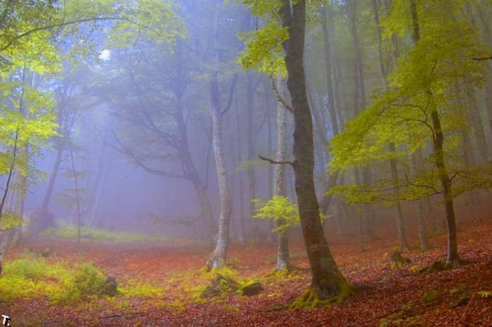 5672049_beautiful_forests_16 (700x465, 62Kb)