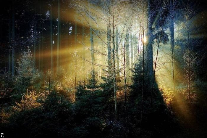 5672049_beautiful_forests_18 (700x466, 82Kb)