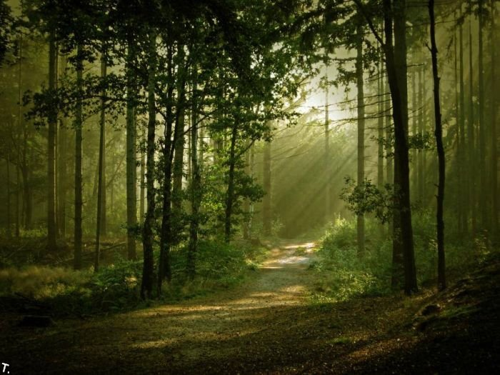 5672049_beautiful_forests_03 (700x525, 87Kb)