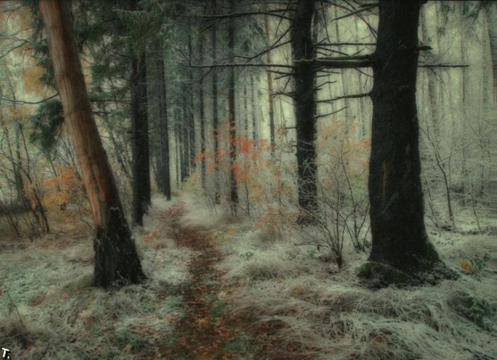 5672049_beautiful_forests_02 (700x508, 77Kb)