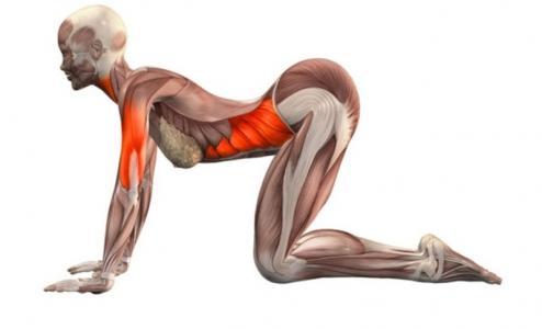 Эти упражнения избавляют от застоя в органах малого таза (494x300, 12Kb)